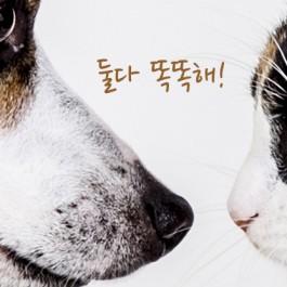 Q. 개가 정말 더 똑똑할까?