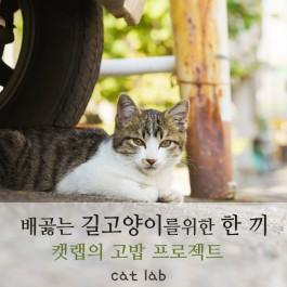 배곯는 길고양이를 위한 한 끼 - ①