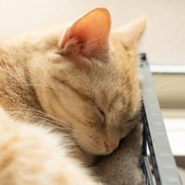 몸 상태가 좋지 않을 때의 고양이 수면 모습 6