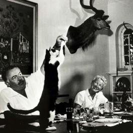 헤밍웨이 씨, 고양이의 개성을 인정하다