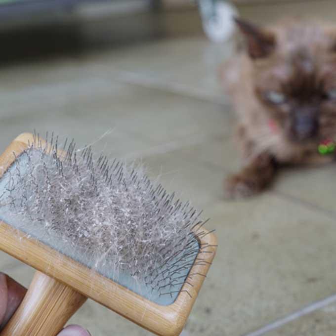 고양이에게 비듬이 생기는 원인 네 가지와 대책