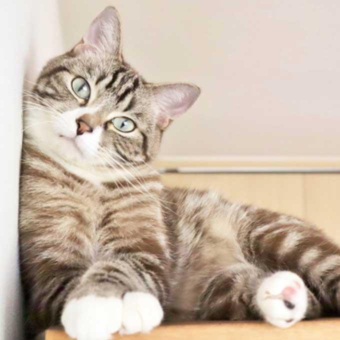 고양이가 집사를 너무 사랑한다는 신호 5