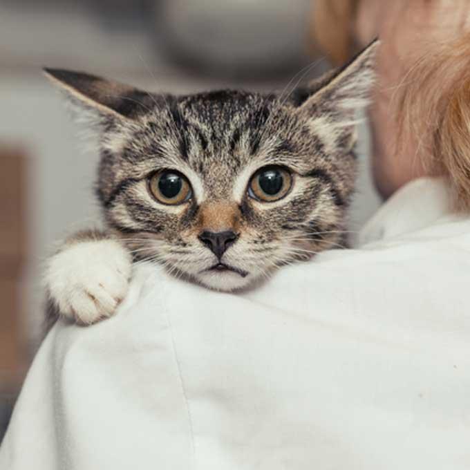 왜 꼭 그래야 하냐고 물으신다면 : 동물을 반드시 보호해야 하는 이유 5