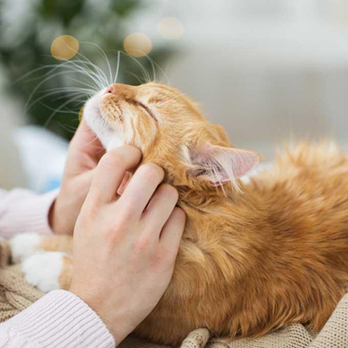 집사가 고양이를 자주 쓰다듬어 줘야 하는 이유 3