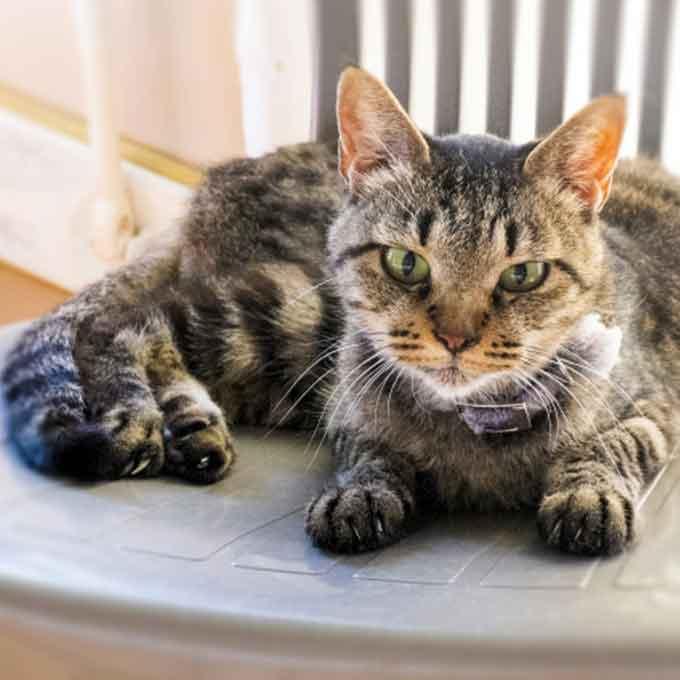 오래 사는 고양이는 어떻게 살까, 장수묘 생활 특징 5