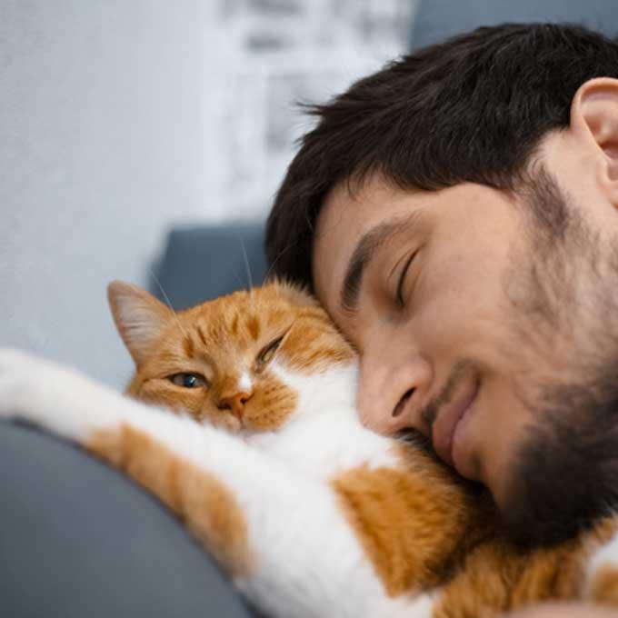밥 잘 줘도 고양이가 응석 안 부리고 싶은 집사 특징 3
