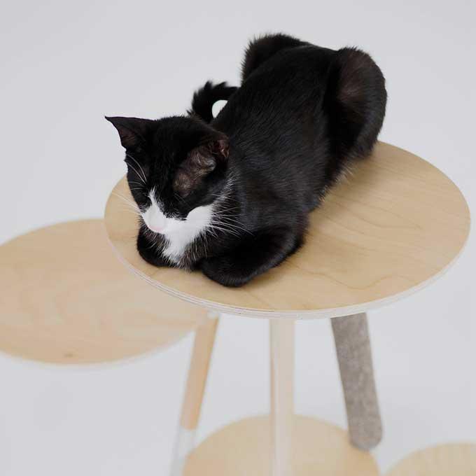 고양이가 집사의 관심을 끌고 싶을 때 하는 행동 6