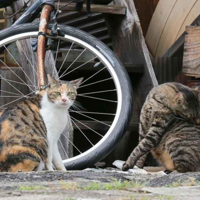 그거시 아니고~,  잘못 알려진 고양이에 대한 큰 오해 4