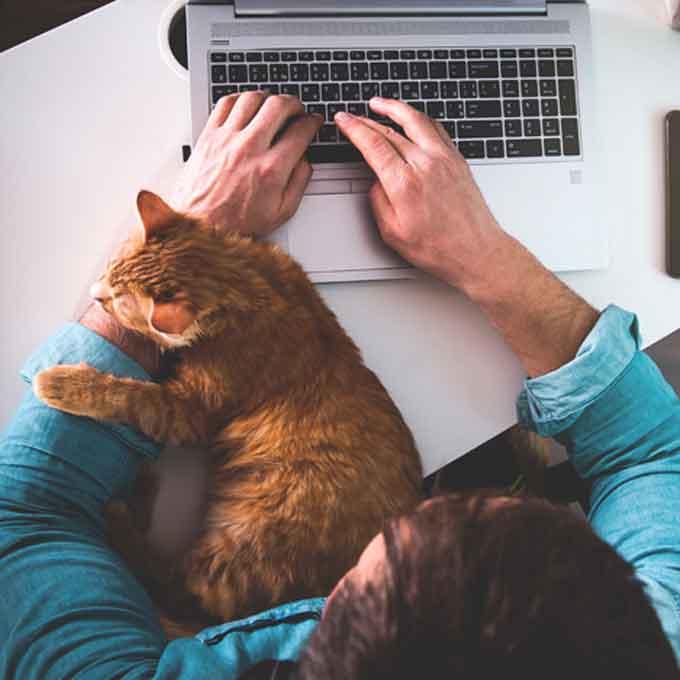 어리광 많은 고양이만 한다는 행동 4