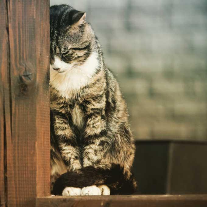 놓치기 쉬운 고양이 우울증 초기 증상 6