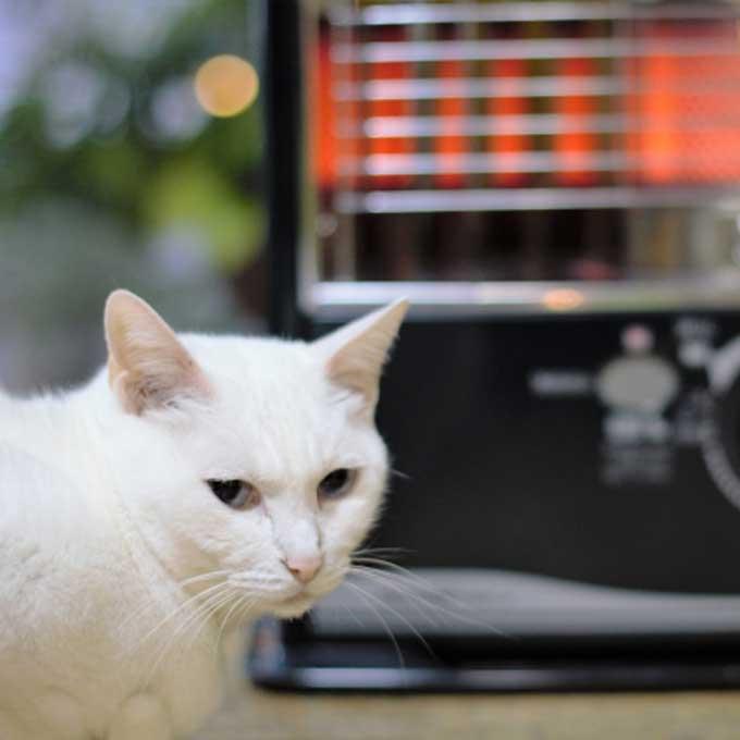 울 냥이 생각하면 해주는 게 좋은, 겨울철 고양이 추위 대책  5