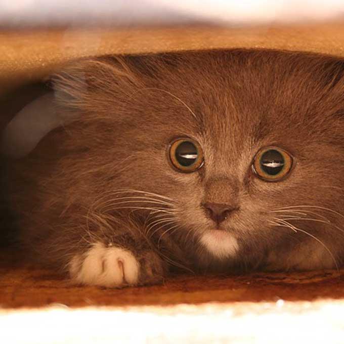 천둥 번개 태풍 무서워하는 고양이 안심시키는 법 4