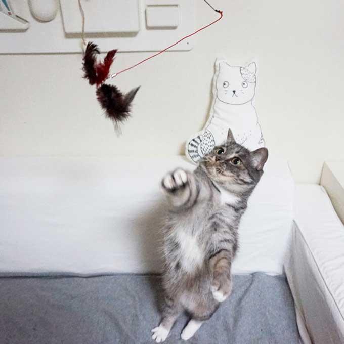 소확행 아닌 대확행! 고양이를 무조건 행복하게 하는 집사 행동 3