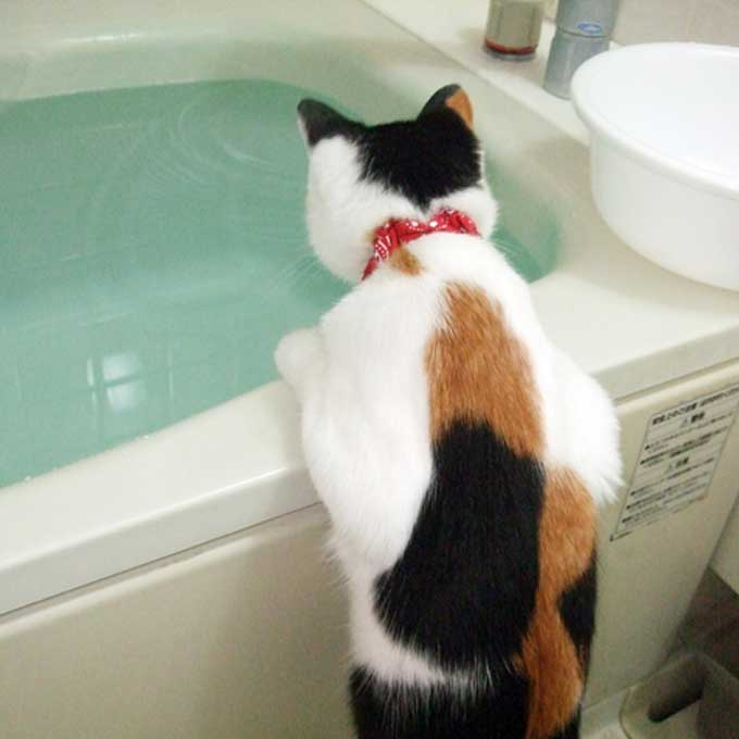 너무 빨리온 여름, 고양이 위해 집사가 지금 당장 할 수 있는 것 총정리