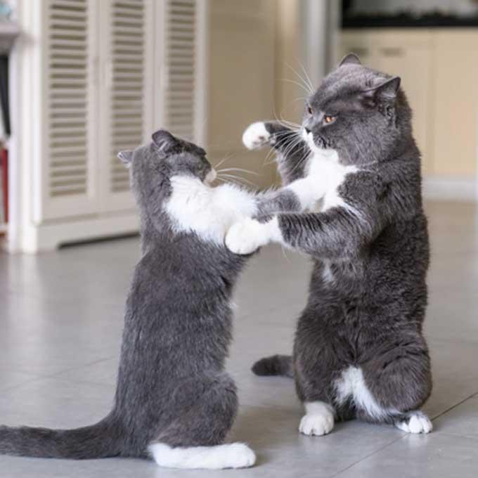 세상 귀여운 고양이가 본성을 드러내는 순간 4