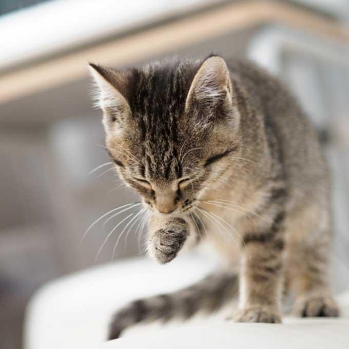 스트레스가 직접적 원인이 되는 고양이 질환 두 가지