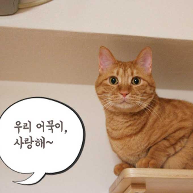 올해도 함께 해준, 내 고양이에게 고마움을 전하는 법 3
