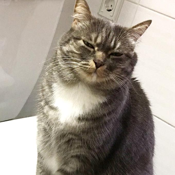 고양이가 응석꾸러기로 로그인되었을 때 신호 4