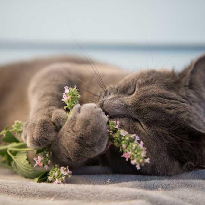 구하기 쉬운 고양이 마약식물 4… 집콕하는 집사한테도 굿!