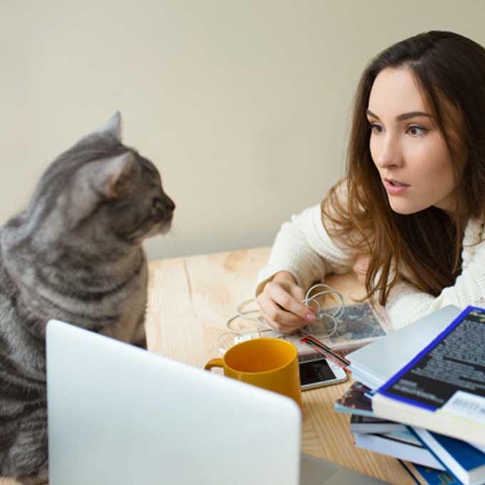 고양이가 느끼는 집사의 비호감 말투 3