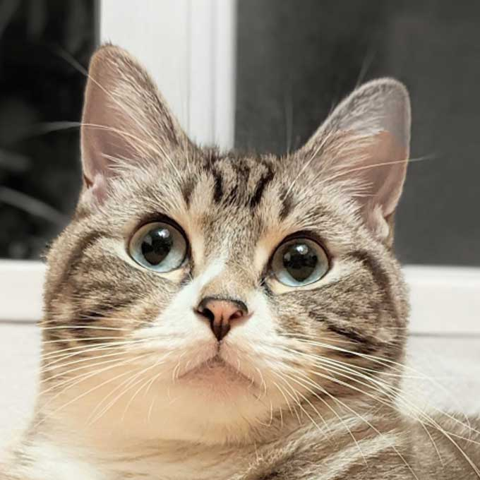 고양이가 특별한 사람에게만 보내는 사랑 신호 5