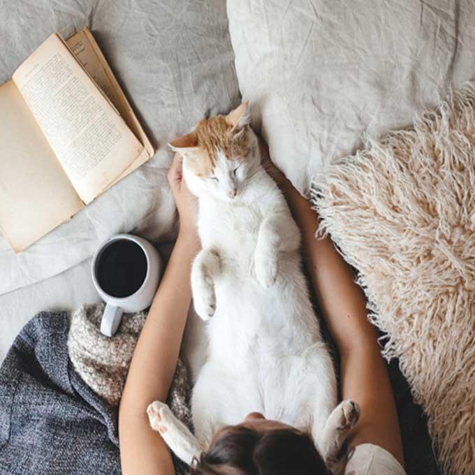 고양이가 애정 하는 베테랑 집사들의 공통점 5