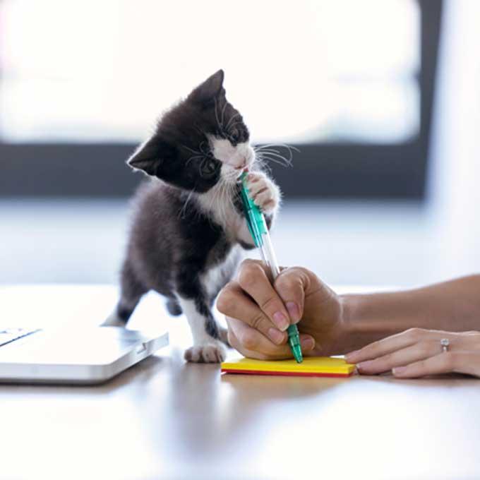 고양이가 좋아하는 사람한테만 하는 장난 3