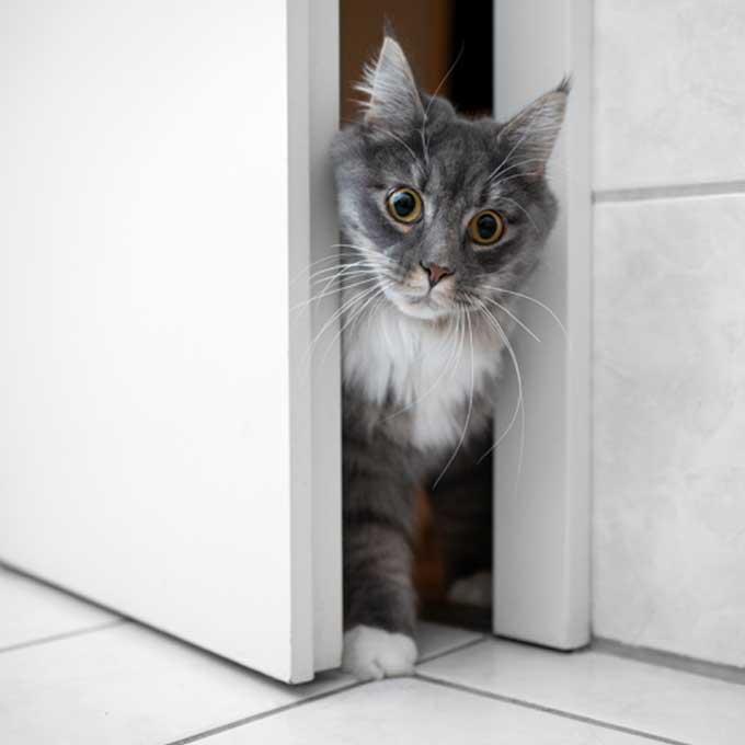 고양이가 집 나가기 쉬운 시기와 장소 4