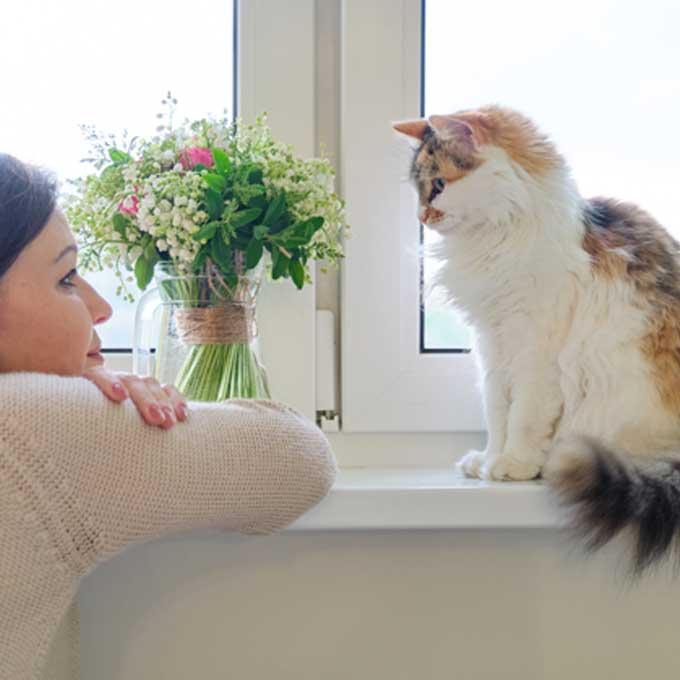 """""""땡큐 집사"""", 고양이가 맘 편해하는 거리감 지켜주는 법 3"""