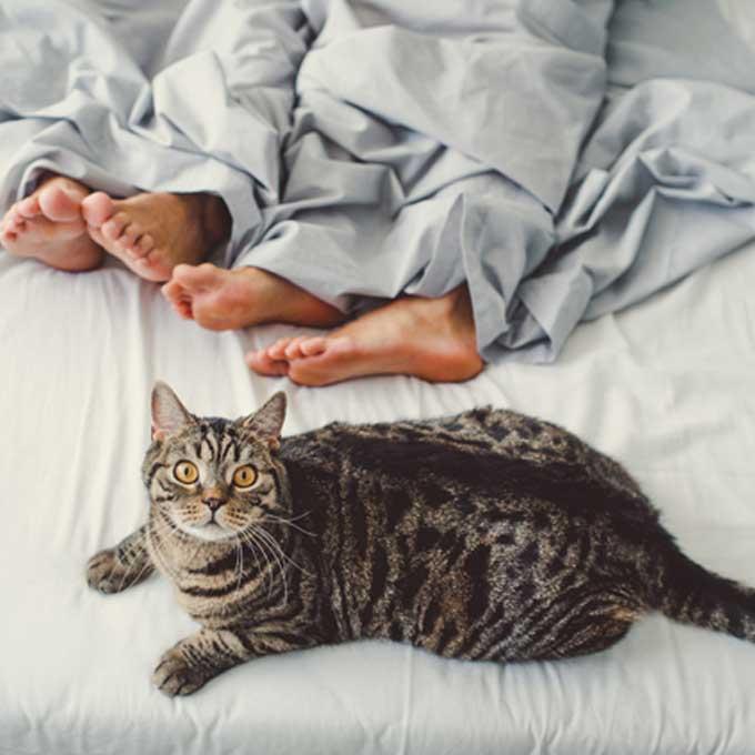 고양이가 집사를 닮는 게 가능한 이유 4