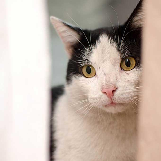 고양이가 외로울 때 하는 행동 5