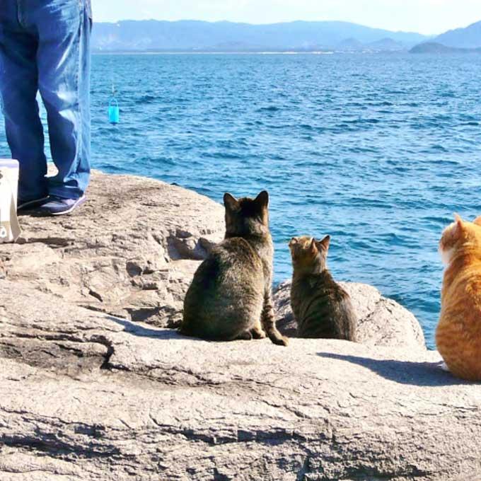 고양이와 잘 통하는 사람만이 갖고 있다는 특징 2