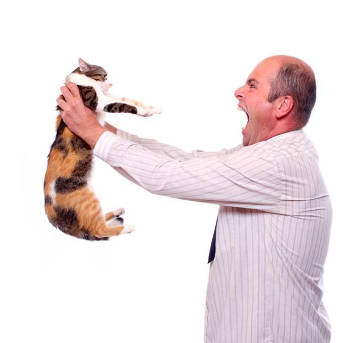 고양이에게 스트레스를 주는 매우 위험한 꾸지람 5