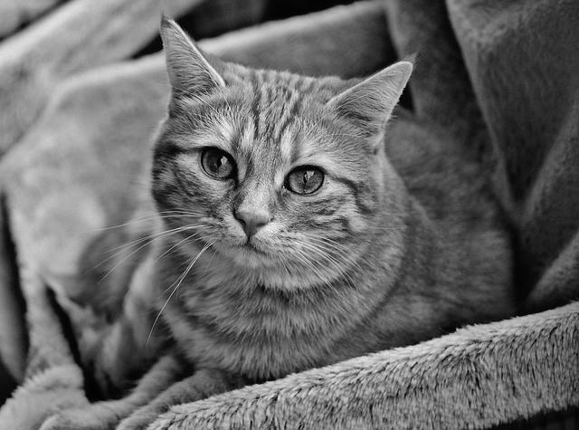 케어, 고양이 공장에서 구조된 고양이 입양 캠페인 진행