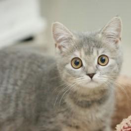 일본 수의사가 말하는, 고양이와 살아야 하는 8가지 이유