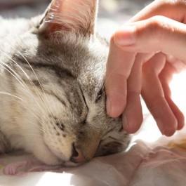 """""""코로나블루에도 고양이가 최고"""", 우울하면 고양이를 쓰다듬자"""