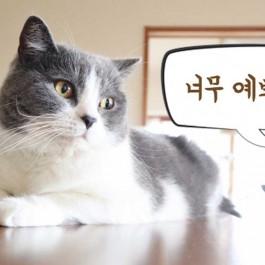 부드럽게 천천히~, 고양이가 좋아하는 집사 말투 3