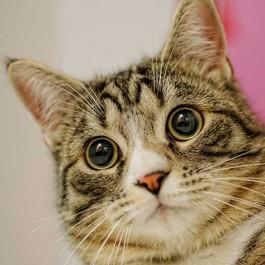 당신이 진짜 몰랐던 고양이 눈에 관한 놀라운 비밀 8