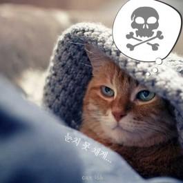 사실 고양이가 집사를 죽이려고 했던 신호 7