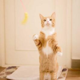 고양이가 집사를 사냥놀이에 초대할 때 보내는 신호 5