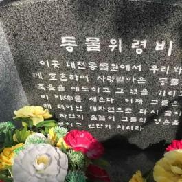 대전 오월드 '탈출 퓨마'사살... 동물원 폐지 국민청원 등 잇따라