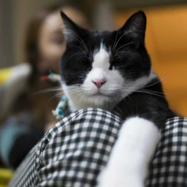 고양이가 집사를 엄청 좋아할 때 하는 대표 행동 5
