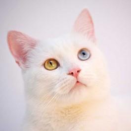 분홍육구·분홍코·분홍귀 여리여리한 고양이의 핑크가 집사에게 주는 컬러테라피 효과 3