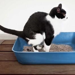 고양이와 거리감을 둬야 하는 상황 6