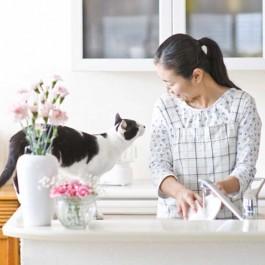 고양이가 따라 하는 집사 행동 5