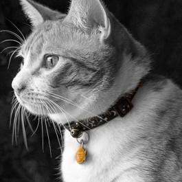 안전한 고양이 목걸이 조건은?