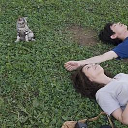 명절 연휴 냥덕 집사들이 보면 좋은 고양이 영화 6선