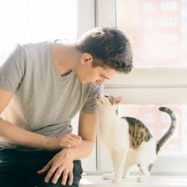 코로나 재난 속 사람들의 뻥 뚫린 마음을 치유하는 것은 고양이였다