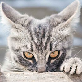 고양이가 마음의 문을 닫아버렸을 때 하는 대표 행동 3