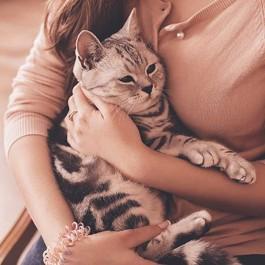 고양이가 인간 집사를 엄마라고 생각했을 때 하는 행동 10